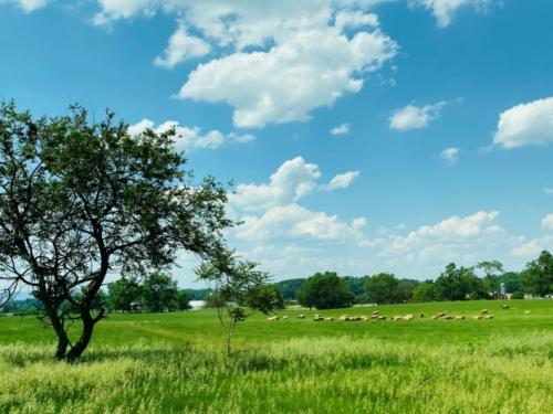 PA countryside 2
